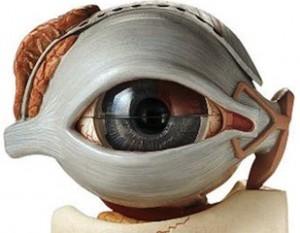 Ligamento cantal y las bolsas en los ojos